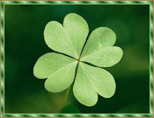 Четырехлистный клевер - символ удачи